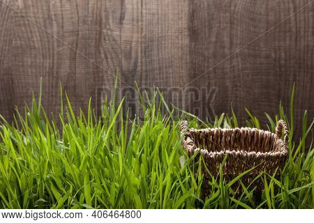 Empty wicker basket on grass with the natural wood background.