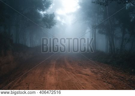 Misty Forest,fog And Pine Forest In The Winter Tropical Forest