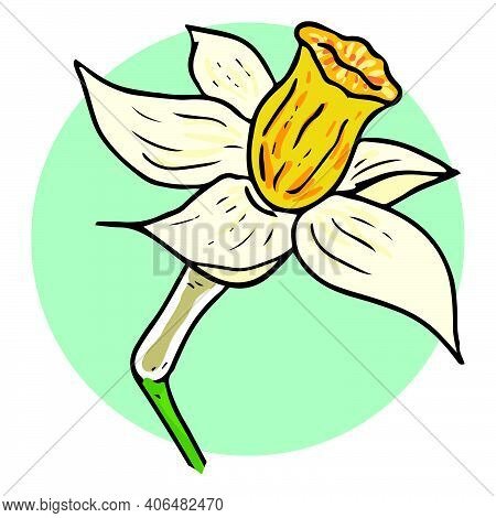Daffodil Flower Icon. Vector Illustration Of Spring Daffodil On Holiday.