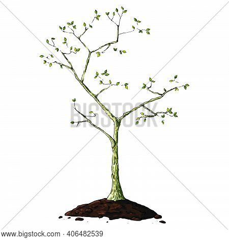 Young Seedling Icon. Vector Illustration Of A Young Sapling For Planting. Hand Drawn Young Bush For