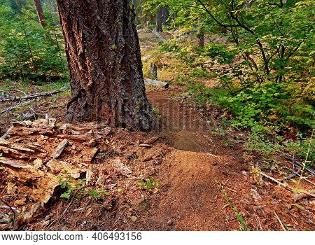 Wooded Walkway - A Hiking Trail By North Fork Lake Creek - West Of Camp Sherman, Or