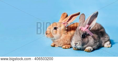 On A Blue Background Sits One Red And One Gray Cute Fluffy Bunny With Bows On The Ears. Minimalism,