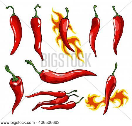 Collection of hand drawn chili peppers. Super hot red chilli peppers. Red isolated spicy mexican peppers on white background. Natural healthy food. Spicy ingredient