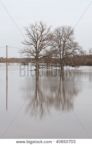 Tree In Flood And Reflection