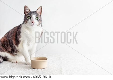 Hungry And Thirsty Cat Looking At The Camera. Tabby Adult White Gray Cat Sitting Near Empty Bowl For