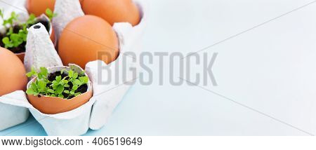 Green Plants In Eggs Shells In The Box On Blue Background