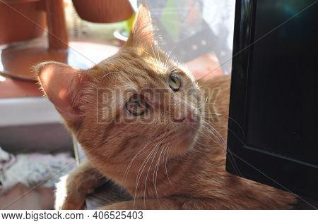 Red Cat. A Beautiful Kitten Is Lying On The Nightstand. Tricky Kitten