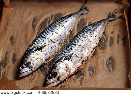 Fresh Mackerel. Whole Raw Seafood For Grill Or Bbq. Delicious Scomber Fish For Restaurant Barbeque,
