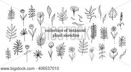 Collection Of Isolated Sketch Flower And Plants On White Background In Isolation. Vector Botanical D