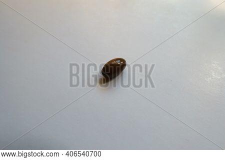 Softgel Glossy Brown Capsule Of Vitamin D3