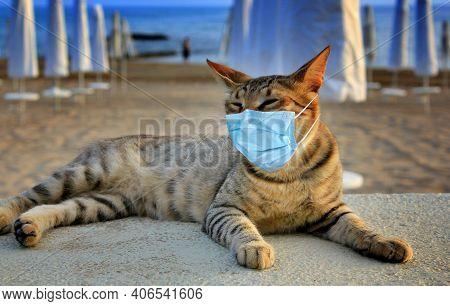 Cat Tourist In Mask On Sea Beach - Coronavirus Safe Travel. Tabby Cat In Mask Relax On Beach Due Cor