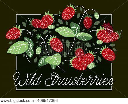 Fresh Delicious Ripe Wild Strawberries Vector Flat Illustration On Dark Background, Natural Diet Foo