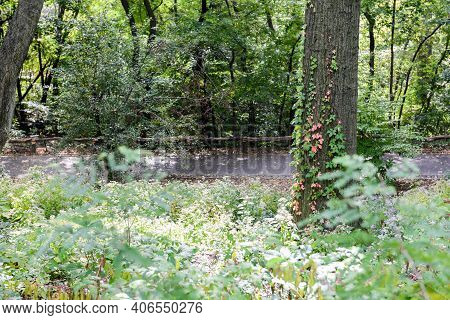 Several Plants, Flowers And Trees On Recreational Areas At Central Park, Manhattan, New York City, N