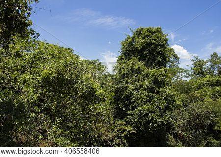 Sao Paulo Contryside Typical Vegetation Near Sao Lourenco River