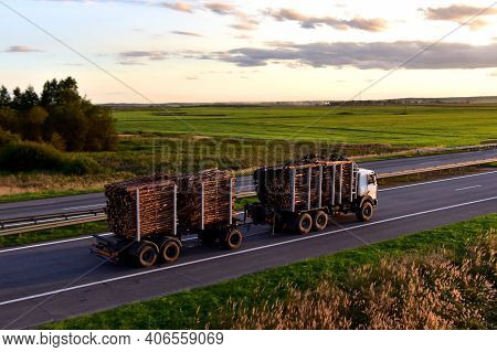 Timber Truck Transporting Cut Trees From Forest Along Highway. Transport Raw Timber From Felling Sit