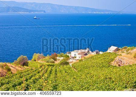 Vineyards By The Sea On Brac Island View, Dalmatia Archipelago Of Croatia