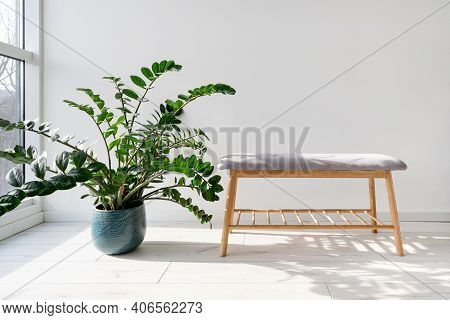 Green Houseplant In Flower Pot Standing On Wooden Floor Near Window And Comfortable Bench In Cozy, M