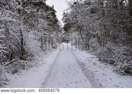 Narrow Country Road Through A Forest In Winter Season