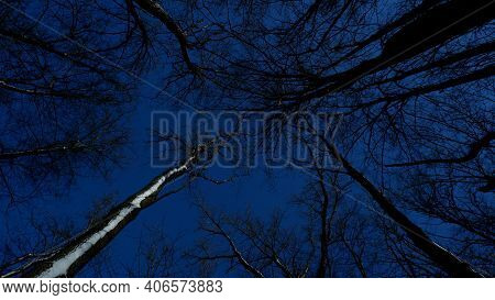 Branches Of Trees And Trees Against The Background Of The Winter Sky. A View From Below At The Trees