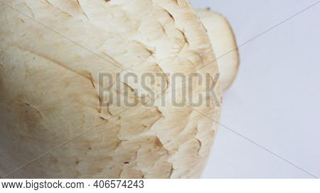 Mushrooms. View From Above. A Close-up Of One Mushroom. Delicious And Healthy Mushrooms Are Grown At