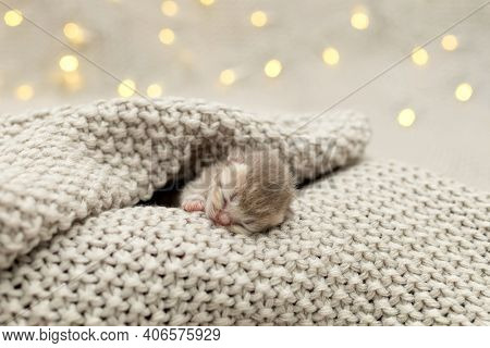 Cute newborn kittens sleeping together