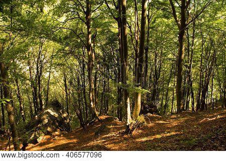 The Woodland Landscape In The Val Alba Nature Reserve In Udine Province, Friuli-venezia Giulia, Nort