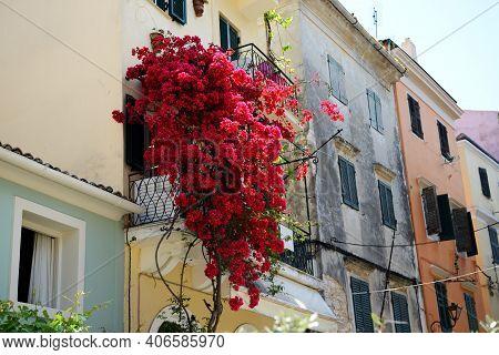 The Bougainvillea Flowers On Balcony In Kerkyra City, Corfu, Greece