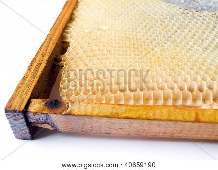 Fresh Honey In Comb.