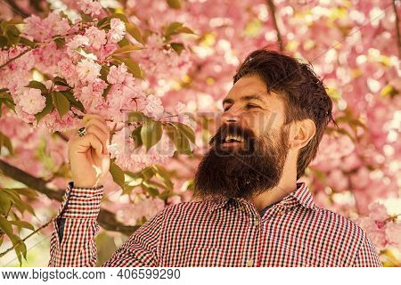 Staying Handsome Any Season. Bearded Man With Stylish Haircut With Sakura Flowers On Background. Spr