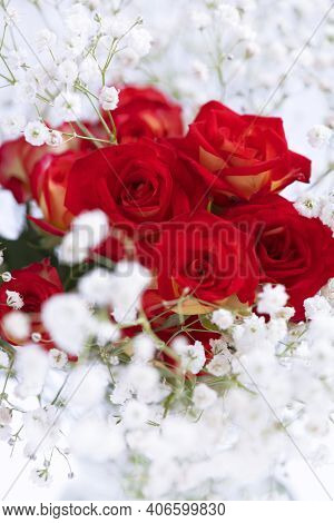 Soft Romantic Red Roses Framed With Gypsophila Shot In A  Selective Focus ,copy Space Top And Bottom