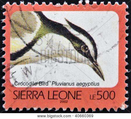 SIERRA LEONE - CIRCA 2002: A stamp printed in sierra Leone shows Crocodile bird pluvianus aegyptius