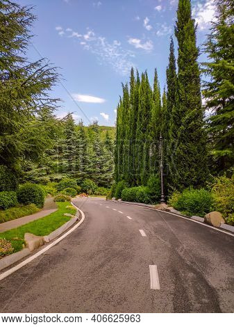Highway Road Journey In Green Forest Sunlight Landscape. Park Road Way Scenic Vertical Photo Sunligh
