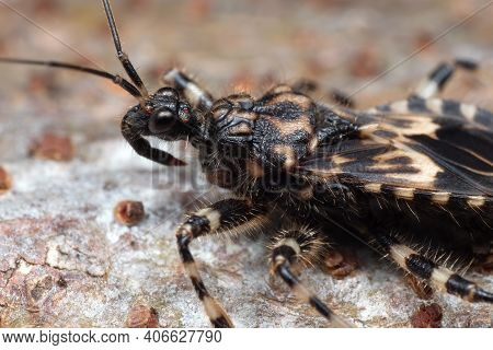 Macro Photography Of Assassin Bug On The Floor
