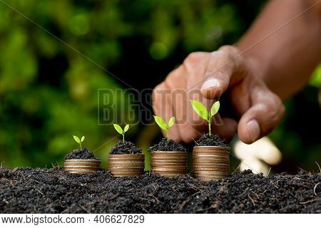 Hand Putting Coin On Coin Stack Growing Graph With Green Bokeh Background,investment Concept.tree Gr