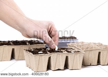 Seeds In Biodegradable Pots Isolated On A White Background.gardening.soil For Seedlings.planting See