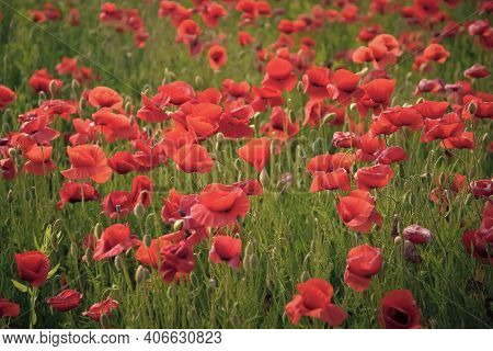 Remembrance Day, Anzac Day, Serenity. Remebrance Day Memorial Day