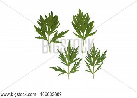 Green Flowers And Plant Leaves On A White Isolated Background, Template For Your Design, Natural Eco