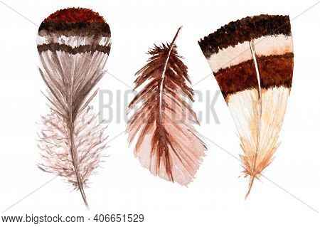 Set Of Watercolor Brown Feathers On White Background. Bird's Feather. Variegated Feather