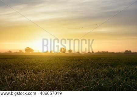 Morning Dew With A Flock Of Birds Shortly After Sunrise. Wet Green Fields With A Bit Of Fog And The