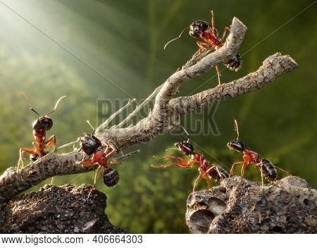 Red Ants. Ants Are Making Houses. Red Ants Are Working Together To Build Houses Or Nests To Find Foo