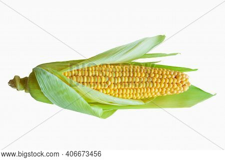 Raw Ear Of Corn With Leaves Isolated On White Background. Ripe Yellow Corncob With Green Leaves