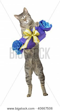 Cute Cat Carrying A Decorative Gift