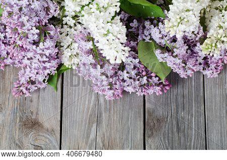 Spring Background, Spring Flowers. Lilac Spring Flowers, Spring Background, Lilac Spring Flowers In