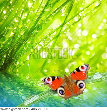 Butterfly Spring Morning Nature Pet Background Nature Animal Grass Nature Background Pet Meadow Natu