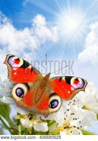 Butterfly Spring Morning Nature Pet Background. Nature Animal Grass Nature Background Pet Meadow. Na