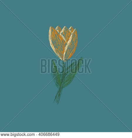 Gorgeous Hand Drawn Yellow Tulip. Floral Design With Spring Flowers For Printing Isolated On Blue Ba