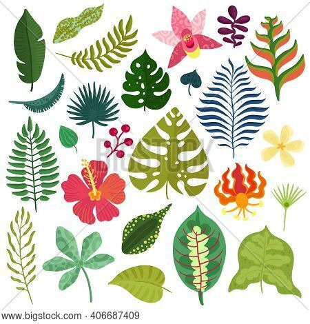 Tropical Plants Decorative Elements Collection With Monstera Leaves Hibiscus Orchids Heliconia Flowe