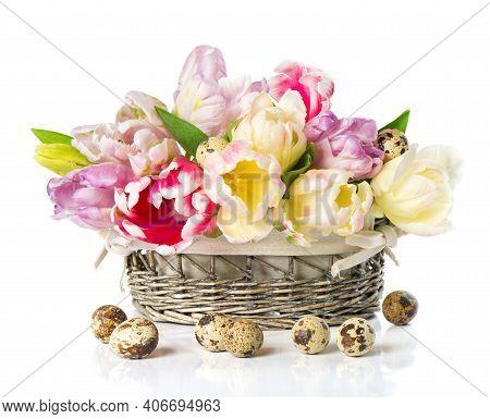 Colorful Tulips. Tulips. Beautiful Tulips In Spring. Colorful Tulips.. Beautiful Tulips For Postcard