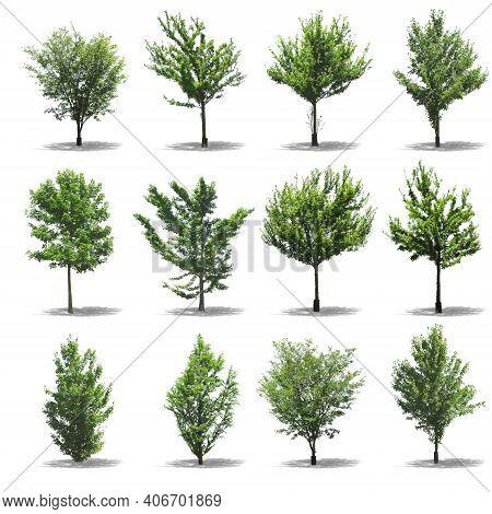 Set Of Tree. Tree Logo. Tree Logo Vector. Tree Icon Vector. Tree Icon. Tree Logo Vector. Decorative