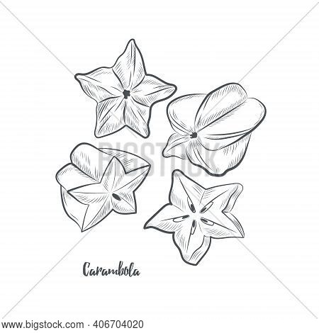 Carambola Fruit Sketch Vector Illustration. Hand Drawn Starfruit Isolated On White Background.